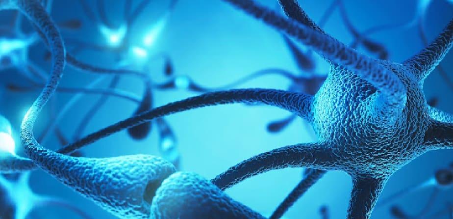 Neuromuscular Re-Education Masterclass